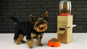 DIY Puppy Dog Food Dispenser From Cardboard At Home  YouTube