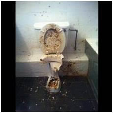 toilette verstopft kosten rohr bekommen extrahierger 228 t f 252 r polsterm 246 bel