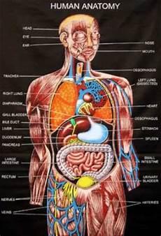 Anatomi Tubuh Peg4sus01