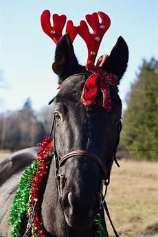 merry horses horses