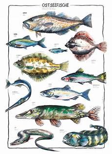 fischarten liste mit bildern illustrators in kinderpostershop