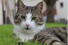 was tun gegen katzenkot im garten katzenkot