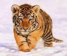 25 Gambar Harimau Yang Lucu Ayeey