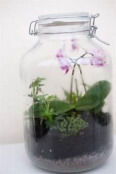 flaschengarten mit orchideen venusfliegenfalle farnen