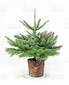 Pflegetipp Weihnachtsbaum