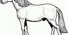 Malvorlage Liegendes Pferd Ausmalbilder Pferde Mit Sattel Ausmalbilder Pferde Bild