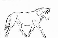 Malvorlage Steigendes Pferd Schoko Kokos Schnitten Receita