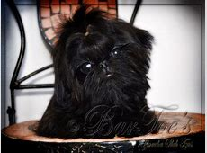 17 Best images about Shih tzus!!! on Pinterest   Teddy