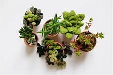 plante grasse feutrinelope plantes grasses au crochet et petites nouvelles