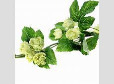 6.5ft Artificial Hops Garland /Vine   Decorative Hop