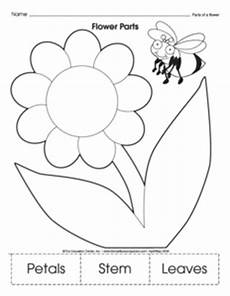 plant parts worksheet kindergarten free 13667 19 best images of plant worksheets for kindergarten free printable plant worksheets printable