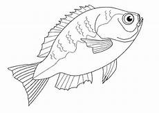 malvorlagen zum ausdrucken ausmalbilder fische kostenlos 3