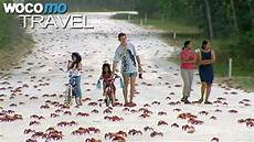 australien 120 millionen landkrabben wandern auf der