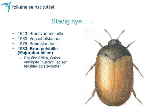 Brun Pelsbille