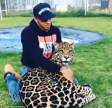 black jaguar white tiger foundation volunteer lewis hamilton ditches mercedes for a playful jaguar in
