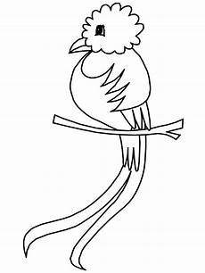 animals of mexico coloring pages 17091 quetzal boys room bird coloring pages animal coloring pages coloring pages