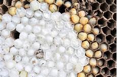 wespennest entfernen worauf achten was sind die kosten