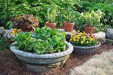 five tips for container gardening success the daily