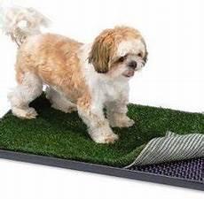 liti 232 re pour chien guide d achat complet jardingue