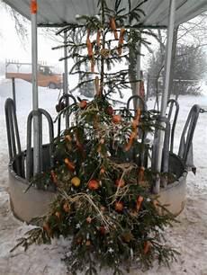 weihnachtsbaum mal anders weihnachtsbaum mal anders pferdebilder galerie im reitforum