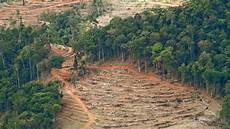 76 Gambar Kerusakan Hutan Akibat Ulah Manusia Gambar