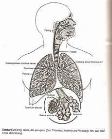 Kesehatann Asuhan Keperawatan Tbc