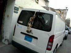 In Car - cat stuck in car wiper