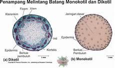 Organ Tumbuhan Akar Batang Daun Dunia Biologi