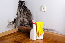 The Definitive Guide To Black Mold