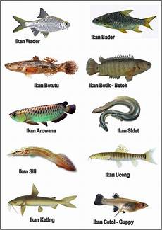Tren Gaya 24 Gambar Nama Nama Ikan Belajar Anak