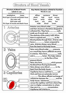 science worksheets biology 12123 biology gcse revision circulation worksheet pack by beckystoke teaching resources tes