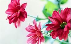 flower wallpaper hd new beautiful flower wallpapers for http