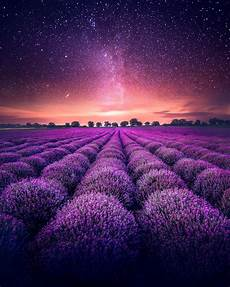 black garden 4k wallpaper wallpaper lavender farm lavender fields starry sky 4k