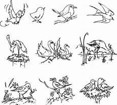 kostenlose malvorlage v 246 gel verschiedene vogelarten zum