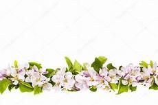 bordure en fleur bordure de fleurs apple photographie elenathewise