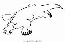 Tier Malvorlagen Quest Schnabeltier 1 Gratis Malvorlage In Tiere Verschiedene