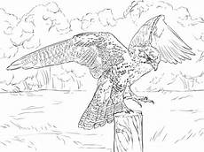 coloring pages to print 17540 prairie falcon coloring page supercoloring