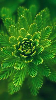 green flower iphone wallpaper hd iphone7papers apple iphone7 iphone7plus wallpaper ns00