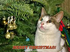 merry christmas cat the feral life cat blog