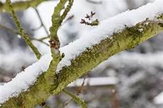 Gartenarbeit Im Winter Tipps Zum Jahresanfang Neustadt