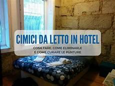punture da cimici da letto cimici da letto in hotel cosa fare come eliminarle e
