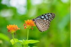 Schmetterling Thront Auf Einer Blume Der