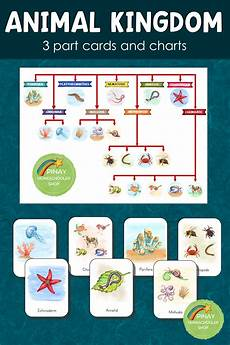 animal kingdom worksheets for kindergarten 14201 animal kingdom 3 part cards and charts animal kingdom animals kindergarten science
