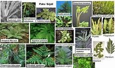 Klasifikasi Ciri Ciri Kingdom Plantae Dan Sistem Organ