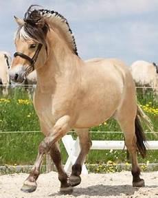 ausmalbilder pferde norweger hof schattenfluss rasseninfos