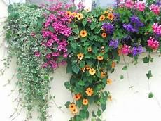 balkonkästen bepflanzen ideen der bunte blumenkasten mein garten haus hof garten
