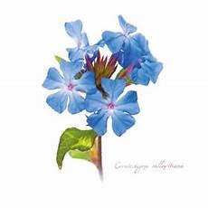 corso fiori di bach on line fiori di bach corso di floriterapia e in aula