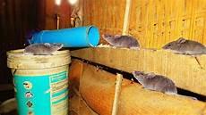 Rattenfalle Selber Bauen Bdw App