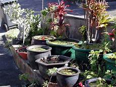 container water gardens hawaii horticulture