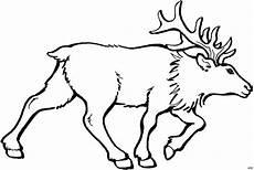 Kostenlose Malvorlagen Elch Gehender Elch Ausmalbild Malvorlage Tiere